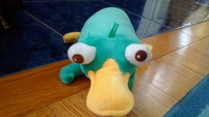 This small stuffed Perry the Platypus is one of the most requested stuffies in my calming bag.