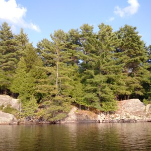 Trees on the rocky shoreline