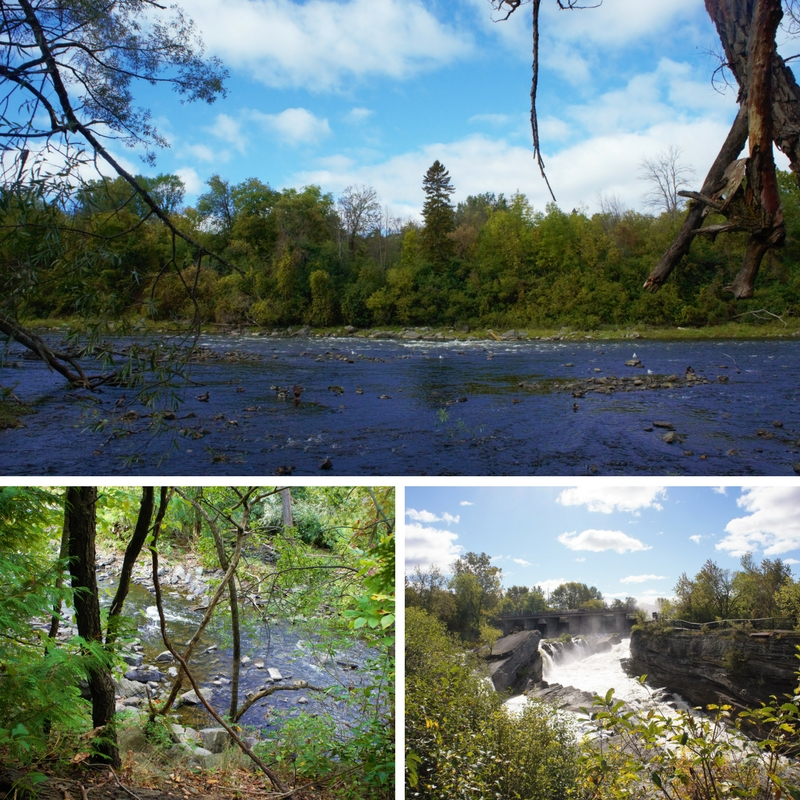 three photos of the river and trees